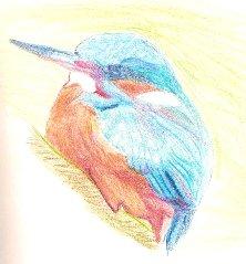 Halcyon Bird drawing